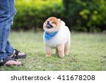 Stock photo dog looking up to owner for food and play on the grass 411678208