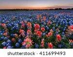 Wild Flower Bluebonnet In Ennis ...