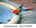 Red Blue Macaw  Ara Macao  Is...
