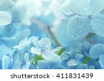 A Young Hydrangea Flower After...