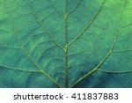 abstract line texture... | Shutterstock . vector #411837883
