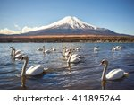 White Swan Swiming In Yamanaka...