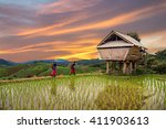 Hmong Woman With Rice Field...