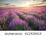 meadow of lavender. nature... | Shutterstock . vector #411923413
