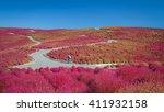 beautiful kochias hill in... | Shutterstock . vector #411932158