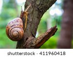 Snail On The Tree In The Garde...