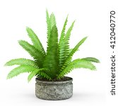 Fern Bush In A Pot Isolated On...
