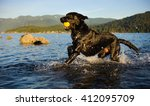 Black Labrador Retriever Dog...