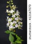 Small photo of Aesculus hippocastanum flower common horse chestnut