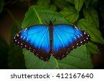 blue morpho  morpho peleides ... | Shutterstock . vector #412167640