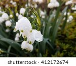 spring snowflake flowers | Shutterstock . vector #412172674