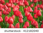 tulip. beautiful colorful red... | Shutterstock . vector #412182040