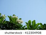 white plumeria group with green ... | Shutterstock . vector #412304908