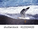 Close Up View Of Seagull On The ...