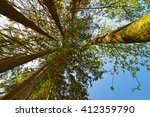 forest  the crown of tree  ...   Shutterstock . vector #412359790