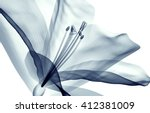 x ray image of a flower ... | Shutterstock . vector #412381009