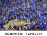 Small photo of Blue fox leicester city football club premier league champions 2016
