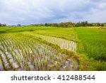 Beautiful Green Rice Fields....
