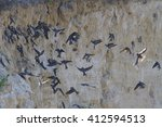 Flock Of Swallows Sitting On...