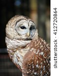 Small photo of Barred Owl looking wise and all-knowing
