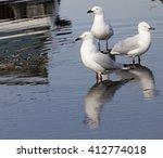 Three  Beautiful Seagulls ...