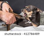 small dog aggression | Shutterstock . vector #412786489