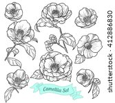 Set Of Camellia. Vector...