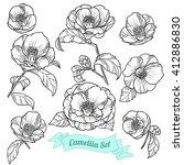 Set Of Camellia. Vector...