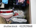 Scottish Fold Cat Is Hiding In...