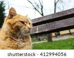 Stock photo orange cat 412994056