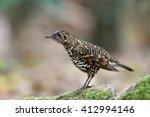 bird  abbott's babbler   ... | Shutterstock . vector #412994146