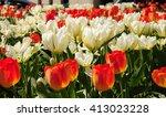 beautiful tulips   happy spring ... | Shutterstock . vector #413023228