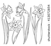 Daffodils  Line Drawings Of...