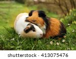 Guinea Pig Friends