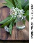 Small photo of Wild garlic, allium ursinum