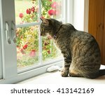 Stock photo brown tabby cat looking out of a window 413142169