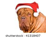Serious Big Dog In Santa Hat