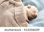 Adorable Newborn Puppy Sleeping