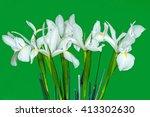 Flower White Iris In Green