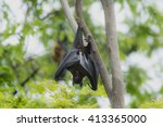 bat hanging on tree | Shutterstock . vector #413365000