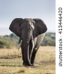 big elephant in the savanna....   Shutterstock . vector #413446420