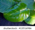 green leaf | Shutterstock . vector #413516986