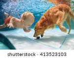Stock photo funny little child play with fun and train golden labrador retriever puppy in swimming pool jump 413523103