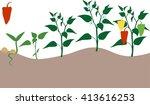 pepper growing stage | Shutterstock . vector #413616253