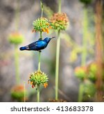 the purple sunbird is a small... | Shutterstock . vector #413683378