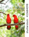 chattering lory  lorius... | Shutterstock . vector #413684098