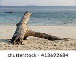 Ocean Tree Timber On The Beach...