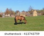 Chesnut Brown Horse  Ferus...