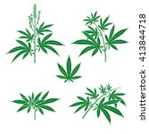 Cannabis  Marijuana Set. Vector