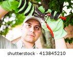 Professional Gardener Pruning ...